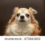 brown chihuahua dog | Shutterstock . vector #672861832