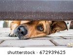 curiosity dog