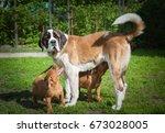 serbernar dog and puppy dog | Shutterstock . vector #673028005