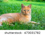 Red Green Eyed Cat Resting On...