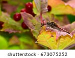 Detailed Color Macro Of A...