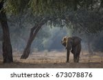 An Elephant Under Trees In Man...