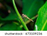 Close Up Macro A Dragonfly...