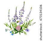 watercolor drawing wild flowers ... | Shutterstock . vector #673134106