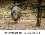 peccary near a tree | Shutterstock . vector #673148716
