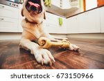 dog with bone. cheerful... | Shutterstock . vector #673150966