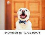 Dog With Bow Tie. Happy...