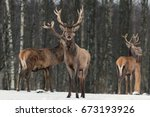 red deer stag in winter. winter ... | Shutterstock . vector #673193926