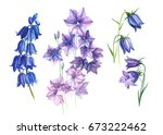 flowers purple bells  buds and ... | Shutterstock . vector #673222462