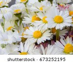 chamomile  bouquet of white... | Shutterstock . vector #673252195