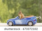 young red squirrel sitting in a ... | Shutterstock . vector #673372102