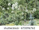 flowers decorative onions...