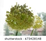 blurred background of garlic... | Shutterstock . vector #673428148