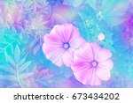 pink lavatela colorful flowers...   Shutterstock . vector #673434202