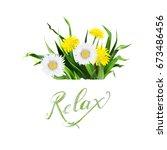 lettering summer chamomile herb ... | Shutterstock .eps vector #673486456