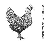 chicken or hen drawn in vintage ... | Shutterstock .eps vector #673488655
