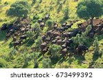 aerial view of  a herd of ... | Shutterstock . vector #673499392