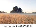 Uk  Foggy Field In Winter