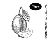 fresh plum. hand drawn sketch... | Shutterstock .eps vector #673568296