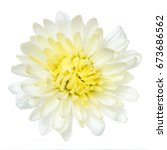 Top View Of White Chrysanthemu...
