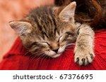 Stock photo striped kitten sleeps on a shoulder 67376695