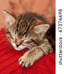 Stock photo striped kitten sleeps on a shoulder 67376698