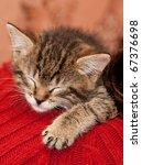 Stock photo striped kitten sleeps on a shoulder 67376698