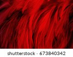 red dark color feather texture... | Shutterstock . vector #673840342