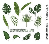 Vector Set Of Tropical Leaves