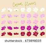 Vector Set Of Cosmos Flowers Of ...