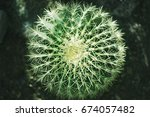 round cactus top view close up  ... | Shutterstock . vector #674057482