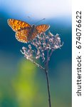 Small photo of A butterfly against the sky. Melitaea athalia