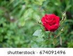 Stock photo rose closeup 674091496