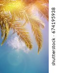 palm trees on the background of ... | Shutterstock . vector #674195938