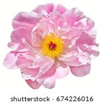 scented fragrant trendy  pale... | Shutterstock . vector #674226016