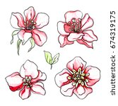 pink tropical flowers blossom... | Shutterstock . vector #674319175
