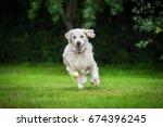 golden retriever dog playing... | Shutterstock . vector #674396245