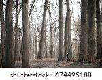 Dry Tree Trunks In A Gloomy...