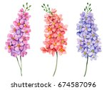 watercolor set of delphiniums ... | Shutterstock . vector #674587096