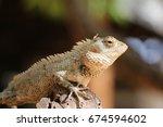 a macro view of a garden lizard ... | Shutterstock . vector #674594602