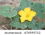 A Yellow Pumpkin Flower With...