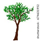green tree isolated on white... | Shutterstock . vector #674631952