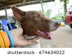 dog happy and dog hand | Shutterstock . vector #674634022