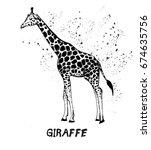 hand drawn sketch of giraffe.... | Shutterstock .eps vector #674635756