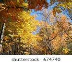 Autumn glory - stock photo