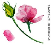 Stock photo wildflower roses flower in a watercolor style isolated full name of the plant roses aquarelle 674820958