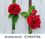 Beautiful Red Roses That Tend...