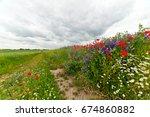 colorful field flowers in... | Shutterstock . vector #674860882