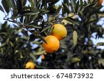 Small photo of The orange is the fruit of the citrus species Citrus × sinensis in the family Rutaceae.
