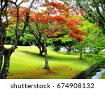 Small photo of Flamboyant tree. Blooming flamboyant tree (Delonix regia) in a park on southern Brazil.